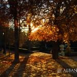 Sobre vidas y árboles